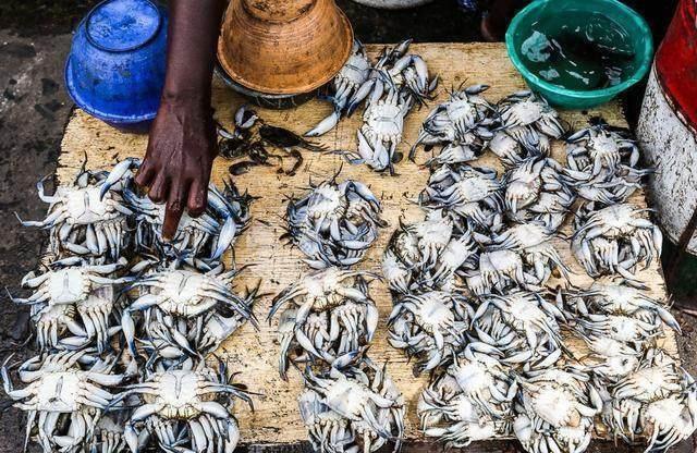 Khu chợ bán hải sản rẻ hơn rau, con gì cũng có kích thước khủng - 5