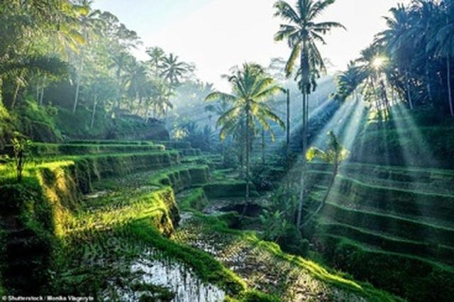 Tín hiệu khởi sắc du lịch châu Á hè 2021 - 4
