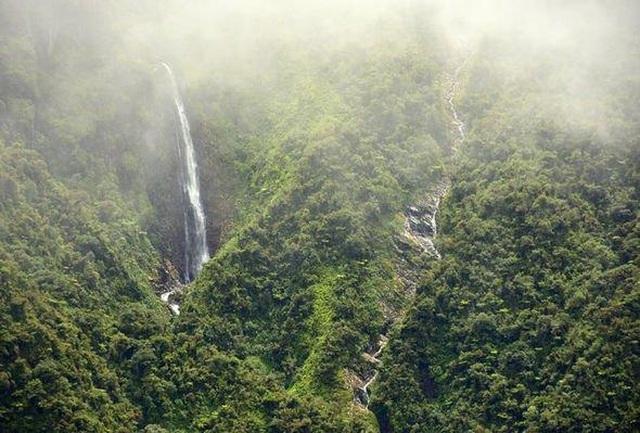 Khu rừng mây bí ẩn của Bolivia hé lộ hơn 20 loài chưa từng được biết đến - 1
