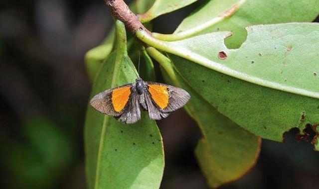 Khu rừng mây bí ẩn của Bolivia hé lộ hơn 20 loài chưa từng được biết đến - 3