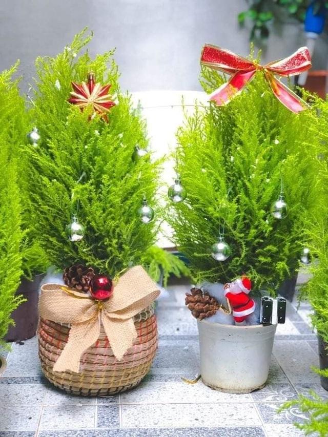Tùng thơm mini giống hệt cây thông đắt khách Noel 2020 - 1