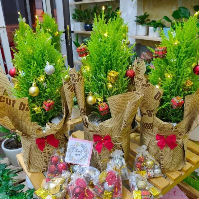 Tùng thơm mini giống hệt cây thông đắt khách Noel 2020 - 2