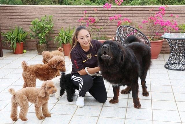 Bi kịch của chó ngao triệu USD: Hết thời bị bỏ rơi thành... chó hoang - 2