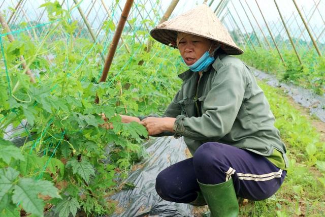 Sau lũ lớn, nông dân hối hả khôi phục rau màu cung ứng Tết - 3