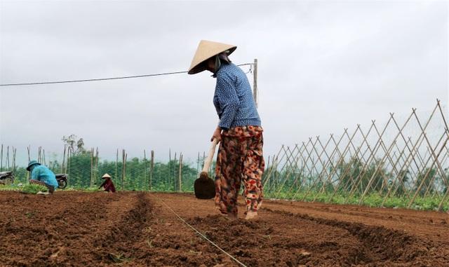 Sau lũ lớn, nông dân hối hả khôi phục rau màu cung ứng Tết - 6
