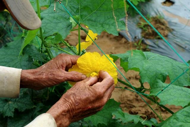 Sau lũ lớn, nông dân hối hả khôi phục rau màu cung ứng Tết - 7