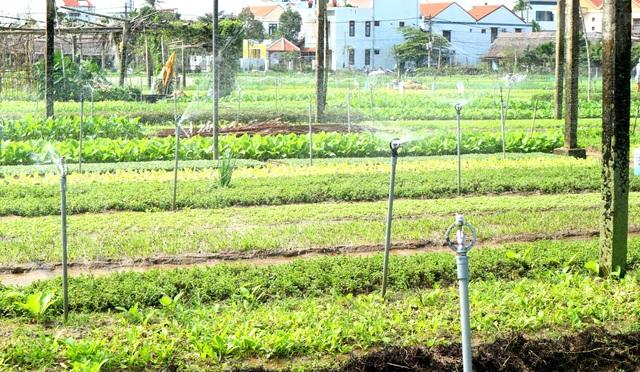Sau lũ lớn, nông dân hối hả khôi phục rau màu cung ứng Tết - 8