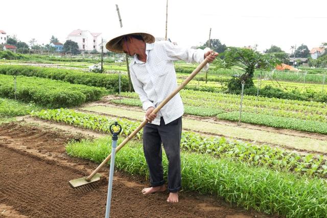 Sau lũ lớn, nông dân hối hả khôi phục rau màu cung ứng Tết - 9