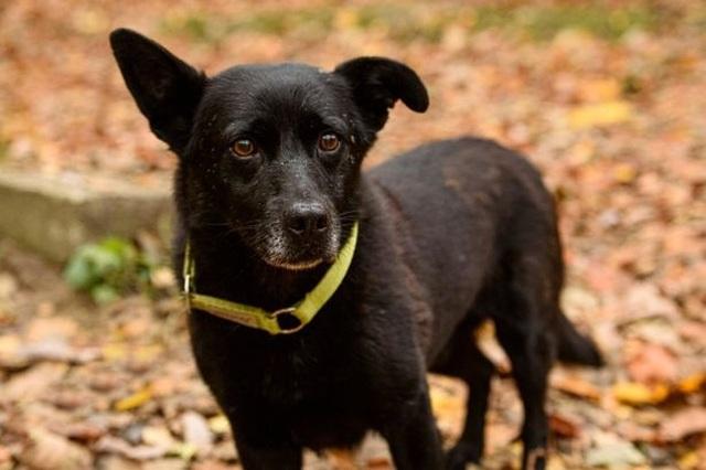 Chú chó mù tìm về với chủ sau hành trình 5 ngày 30 km - 3