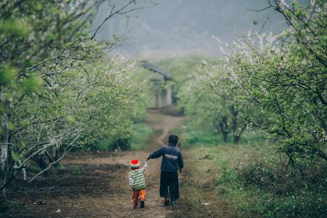Đẹp quên lối mùa hoa mận nở trắng trời cao nguyên Mộc Châu - 2