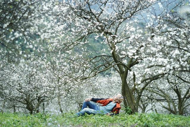 Đẹp quên lối mùa hoa mận nở trắng trời cao nguyên Mộc Châu - 4