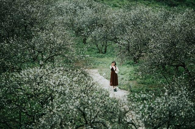 Đẹp quên lối mùa hoa mận nở trắng trời cao nguyên Mộc Châu - 6