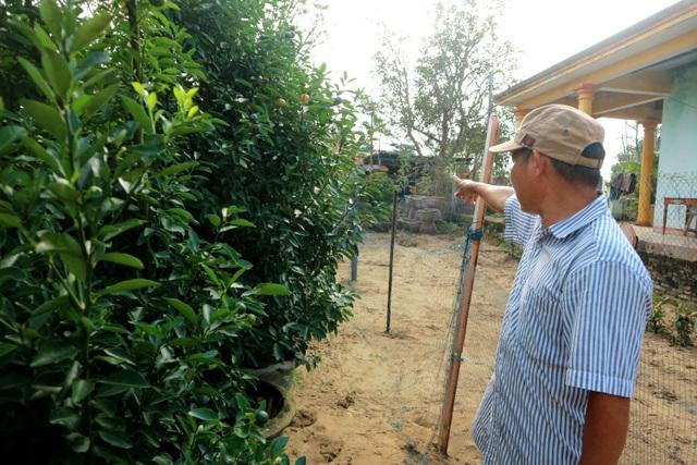 Người trồng cây cảnh ở Hội An phập phồng lo vụ Tết - 7
