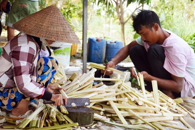 Giáp Tết, kiếm hàng trăm ngàn đồng mỗi ngày từ cây bồn bồn - 1