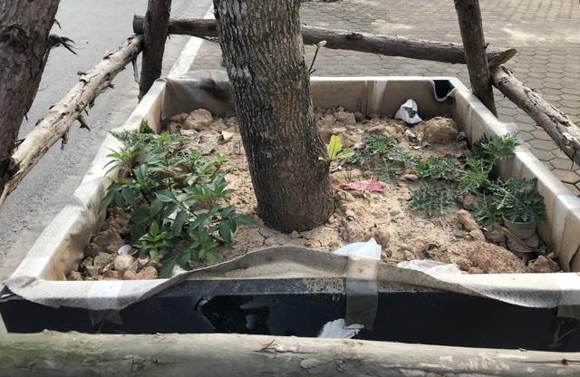 Hà Nội: Cách trồng khác lạ khiến mười cây chết chín, một cây gật gù - 9