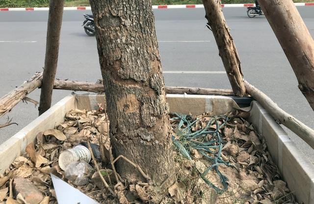 Hà Nội: Cách trồng khác lạ khiến mười cây chết chín, một cây gật gù - 8