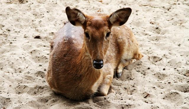 Những con vật co ro nép mình trong vườn bách thú Thủ Lệ vì lạnh - 6