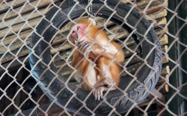 Những con vật co ro nép mình trong vườn bách thú Thủ Lệ vì lạnh - 9