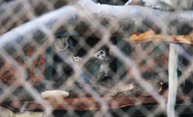 Những con vật co ro nép mình trong vườn bách thú Thủ Lệ vì lạnh - 10