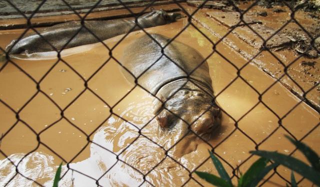 Những con vật co ro nép mình trong vườn bách thú Thủ Lệ vì lạnh - 13