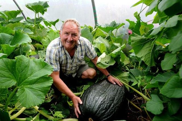 Choáng ngợp khu vườn siêu khổng lồ, rau bắp cải cũng nặng đến... 45kg - 1