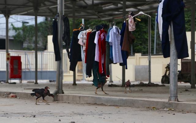 Cận cảnh chợ 18 tỷ đồng để... thả gà ở Hà Nội - 4