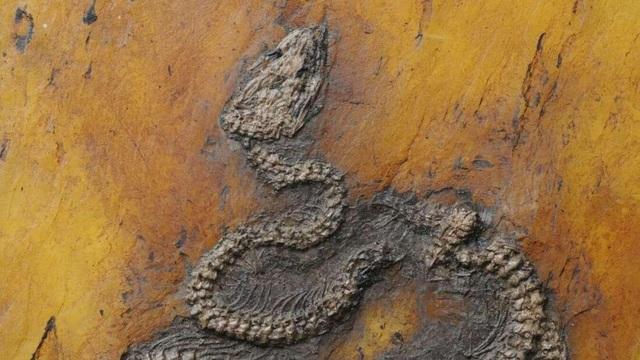 Phát hiện hóa thạch trăn cổ nhất thế giới ở châu Âu - 1