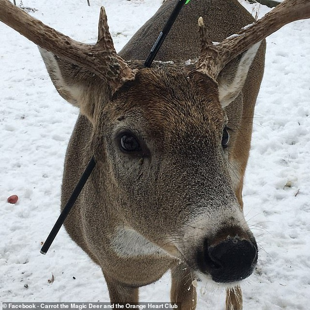 Kế hoạch giải cứu chú nai bị mũi tên bắn xuyên qua đầu trước lễ Giáng sinh - 2