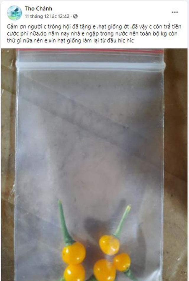 Bất ngờ loại ớt đắt nhất thế giới giá nửa tỷ một kg được người Việt đem tặng miễn phí - 6