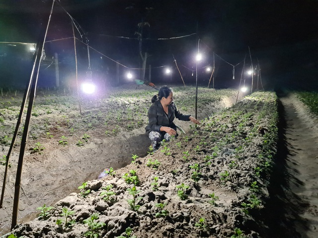Người trồng hoa vùng rốn lũ chong đèn thúc hoa, đau đáu nỗi lo mất Tết - 2