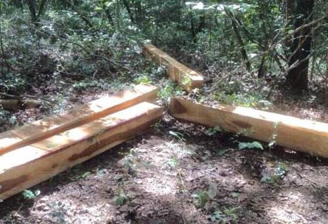 Phát hiện vụ phá rừng nghiêm trọng tại khu bảo tồn thiên nhiên - 2