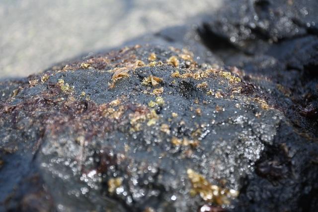 Cuối năm, đội sóng hái rong mứt trên đá nham thạch - 2