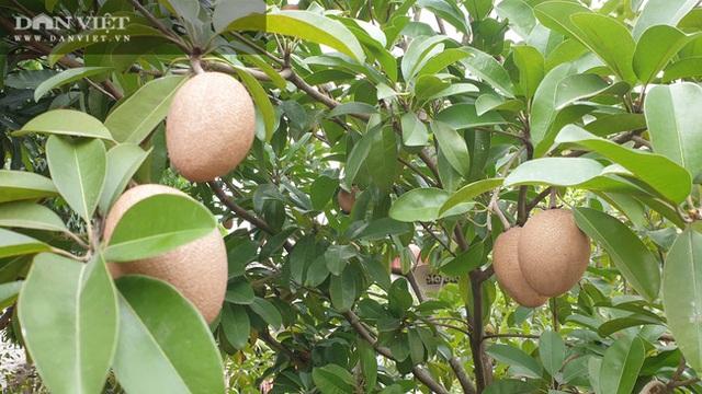Nhờ cây giống này, lão nông Thái Bình lãi gần 1 tỷ đồng/năm, thoát cảnh sạt nghiệp - 2