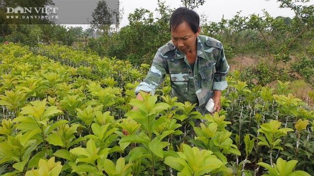 Nhờ cây giống này, lão nông Thái Bình lãi gần 1 tỷ đồng/năm, thoát cảnh sạt nghiệp - 3