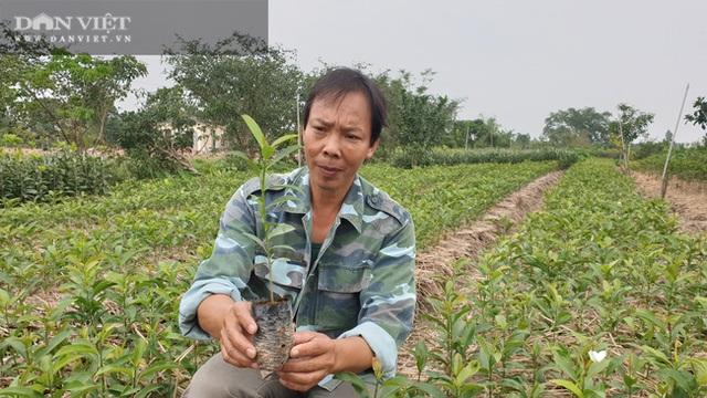 Nhờ cây giống này, lão nông Thái Bình lãi gần 1 tỷ đồng/năm, thoát cảnh sạt nghiệp - 6