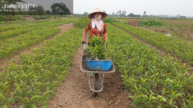 Nhờ cây giống này, lão nông Thái Bình lãi gần 1 tỷ đồng/năm, thoát cảnh sạt nghiệp - 7