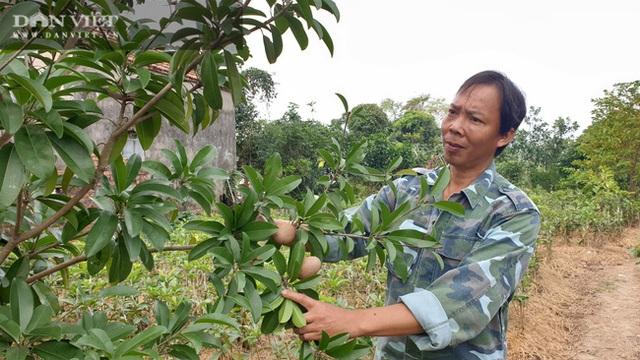 Nhờ cây giống này, lão nông Thái Bình lãi gần 1 tỷ đồng/năm, thoát cảnh sạt nghiệp - 8