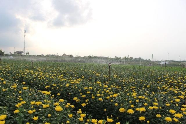 Bỏ lúa sang trồng cây giá trị kinh tế, người dân thu về trăm triệu đồng - 3