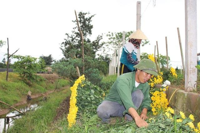 Bỏ lúa sang trồng cây giá trị kinh tế, người dân thu về trăm triệu đồng - 5