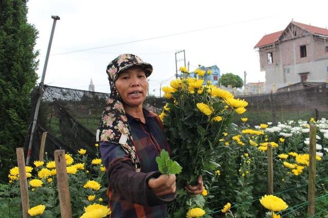 Bỏ lúa sang trồng cây giá trị kinh tế, người dân thu về trăm triệu đồng - 4