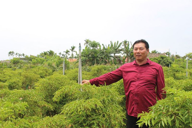 Bỏ lúa sang trồng cây giá trị kinh tế, người dân thu về trăm triệu đồng - 1