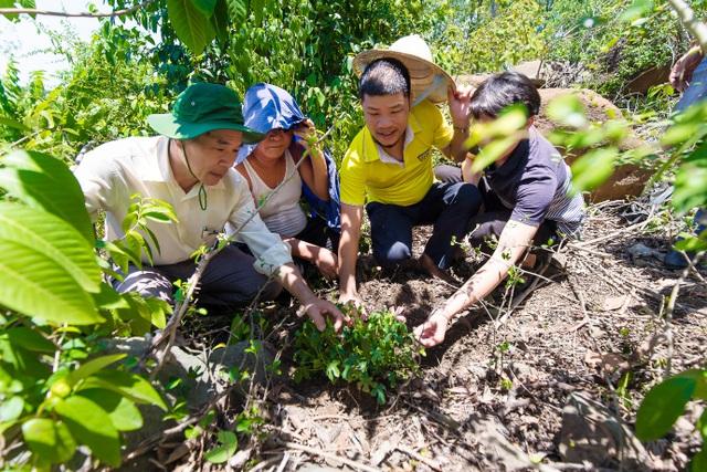 Hành trình tìm cây sâm quý trên núi Báo - 1