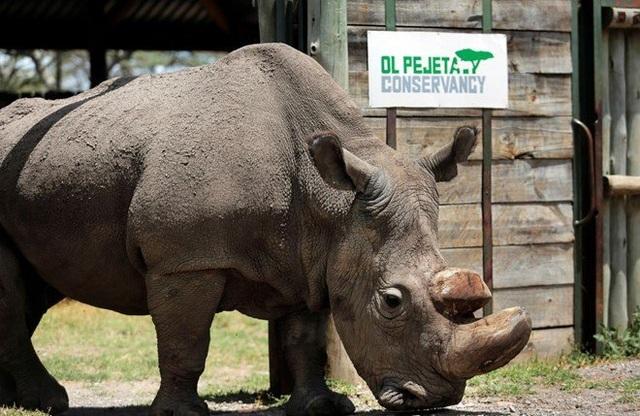 Những con số đáng báo động về nạn săn bắn và buôn lậu tê giác - 1
