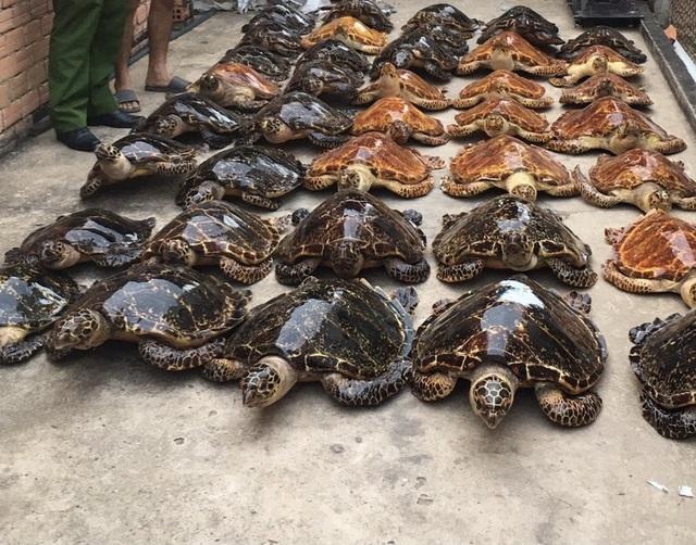 Phát hiện 39 cá thể nghi vấn là rùa biển sấy khô - 1