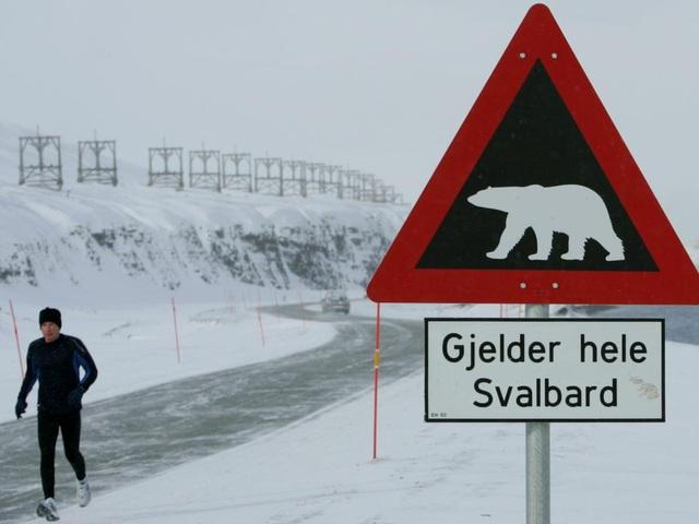 Nơi khách đến sống không cần visa, gấu Bắc Cực nhiều hơn con người - 4