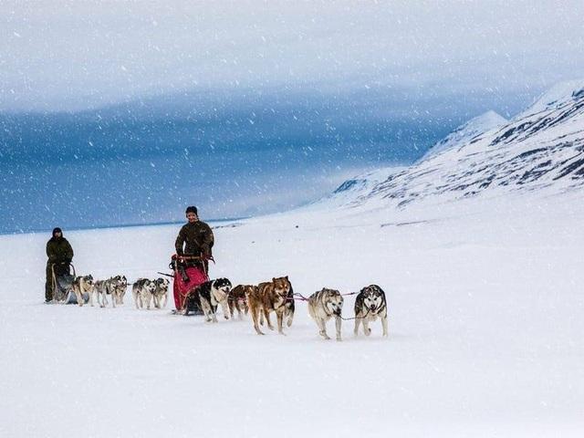 Nơi khách đến sống không cần visa, gấu Bắc Cực nhiều hơn con người - 8