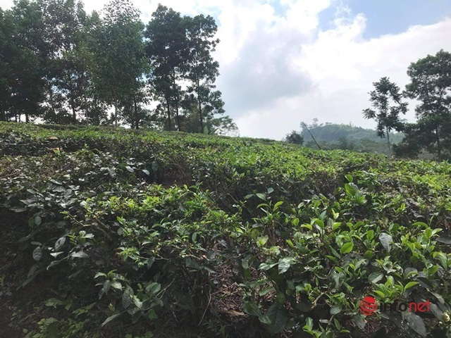 Người Hà Nội đua về các huyện vùng ven mua đất làm nhà vườn - 3