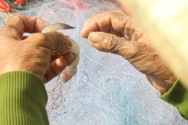 Hà Tĩnh: Mùa cá cháo bãi ngang những ngày cuối năm 2020 - 4