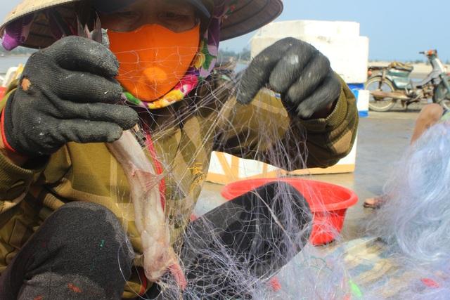 Hà Tĩnh: Mùa cá cháo bãi ngang những ngày cuối năm 2020 - 5