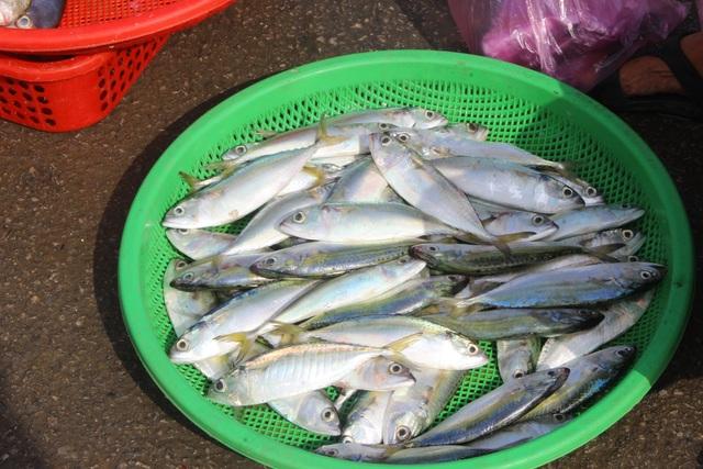 Hà Tĩnh: Mùa cá cháo bãi ngang những ngày cuối năm 2020 - 12